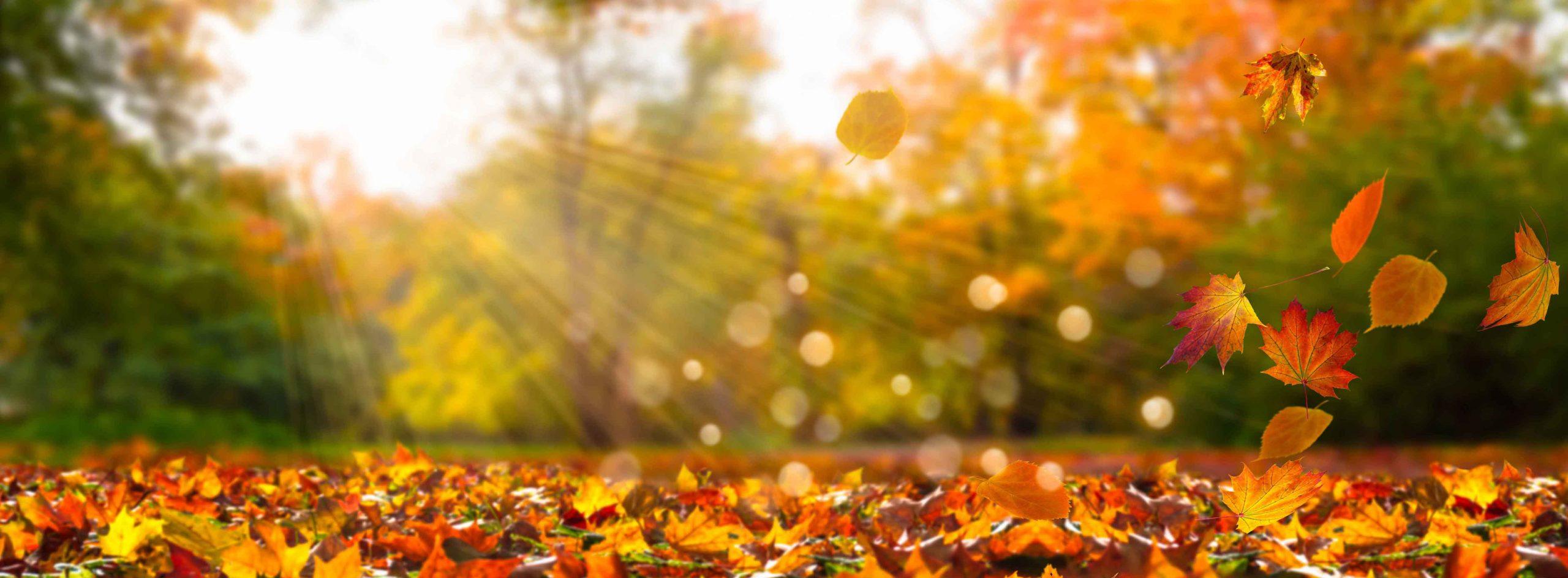 Dortmund Laub im Herbst fegen das jährliche Ritual