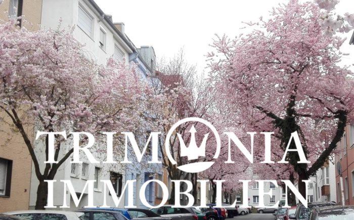Kirschblüten in Dortmund