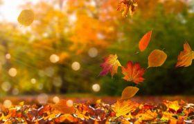 Laub fegen im Herbst